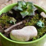 My Miniature Gardens