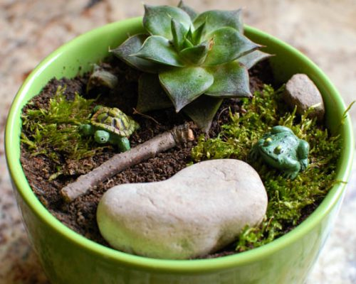 pot garden (1 of 2)